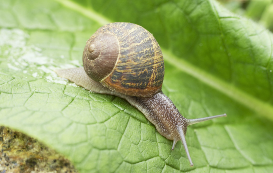 Preventing Garden Pests With Simple Ways