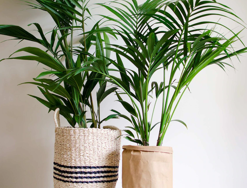indoor houseplants