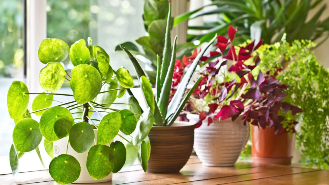 Potted Plants – How To Care For Them