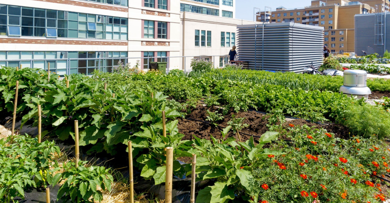 Growing Your Vegetables in a City